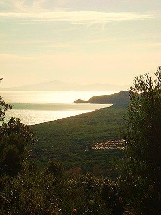 Roccamare - The pinewood of Roccamare