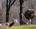 Pittsburgh Zoo (4509853050).jpg