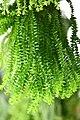 Plant of Thailand - 20.jpg