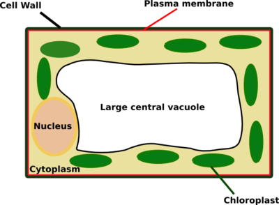 biology answering the big questions of life cells wikibooks open
