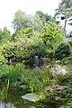 Plantes aquatiques-Jardins de Callunes (7).jpg