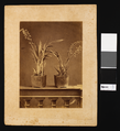 Plants with Parasites WDL191.png