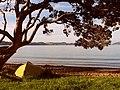 Pohutukawa-tree-666814 960 720(1).jpg