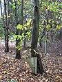 Poringland Community Wood - geograph.org.uk - 1533440.jpg