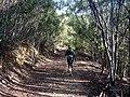 Portugal - Algarve - Barao de Sao Joao - walking in the woods - Ann (25817064515).jpg