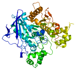 Protein BCHE PDB 1p0i.png