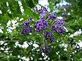 Purple flower on the farm.jpg