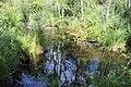 Réserve naturelle Marais Lavours Aignoz Ceyzérieu 79.jpg