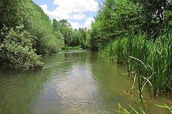 Río Cea 2.jpg
