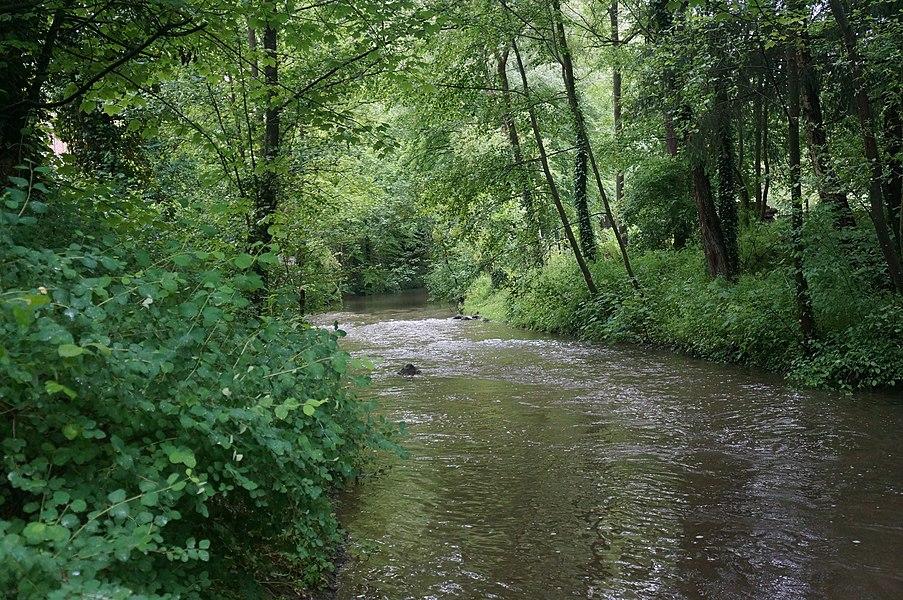 La  La réserve naturelle régionale du bois d'Encade entre Gussignies  et Bellignies.- Nord.- France.