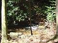 Rabun County, GA, USA - panoramio - srbullock.jpg