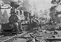 Railroad Logging, South Kaibab.jpg