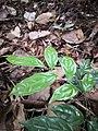Rain forest 15.jpg