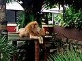 Raja Singa.jpg