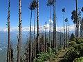 Ravangla, Sikkim by Masum Ibn Musa (171).jpg