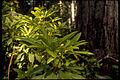 Redwood National Park REDW9347.jpg
