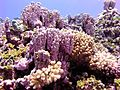 Reef3732 - Flickr - NOAA Photo Library.jpg