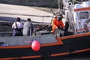 Retour de la pêche à la seiche du fileyeur Jason IV (25).JPG