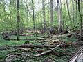 Rezerwat ścisły w Puszczy Białowieskiej 2 (Nemo5576).jpg