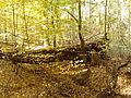 Rezerwat przyrody Dęby w Meszczach 201012 12.17.jpg