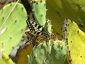 Ria butterfly.jpg