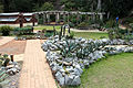 Rio de janeiro, jardim botanico, piante grasse 01.JPG