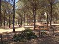 Riserva naturale orientata Bosco di Santo Pietro 01.jpg