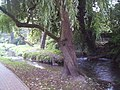 River Dour - geograph.org.uk - 591642.jpg
