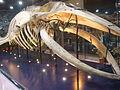 Riyadh whale.JPG