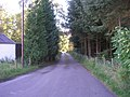 Road beside the forest - geograph.org.uk - 561314.jpg