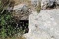 Rock cut tomb - Bayt Nattif.jpg