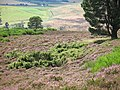 Roe deer - geograph.org.uk - 526688.jpg