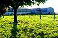Rose Hill Lodge Farm - geograph.org.uk - 1318871.jpg