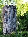 Rotbuche.Naturdenkmal.7-2B.Marienfelder.Allee.24.jpg