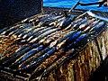 Ryby v Chorvatsku.jpg