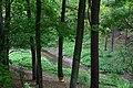 Rzeka Giłwa przepływająca przez Gietrzwałcki Las. Widać ślady działalności bobrów. - panoramio.jpg