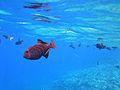 SEA LIFE, MAUI.jpg