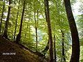 SUUÇTU KAYIN ORMANI KARTPOSTALLIK BİR FOTOĞRAF - panoramio.jpg