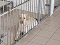 SVVP Klikatá, pes v kotci.jpg