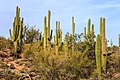 Saguaro National Park near Tucson Arizona (7334031850).jpg