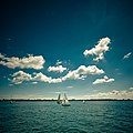 Sail boats in Toronto harbour.jpg