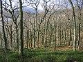 Sallochy Wood. - geograph.org.uk - 125877.jpg