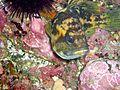 Sanc0049 - Flickr - NOAA Photo Library.jpg