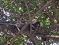 Santuário Ecológico de Pipa.jpg