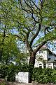 Schleswig-Holstein, Halstenbek, Naturdenkmal 09-06 NIK 3173.JPG