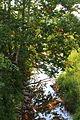 Schwaben Creek looking downstream in September 2015.JPG