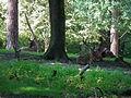 Schwetzingen Rothirschgehege 2011.JPG