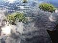 Sebangau River 09.jpg