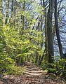 Sentier de montée au col de Fraisse 2017-04-17.jpg