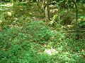 Sentier karstique - Doline d'effondrement (Besain).jpg